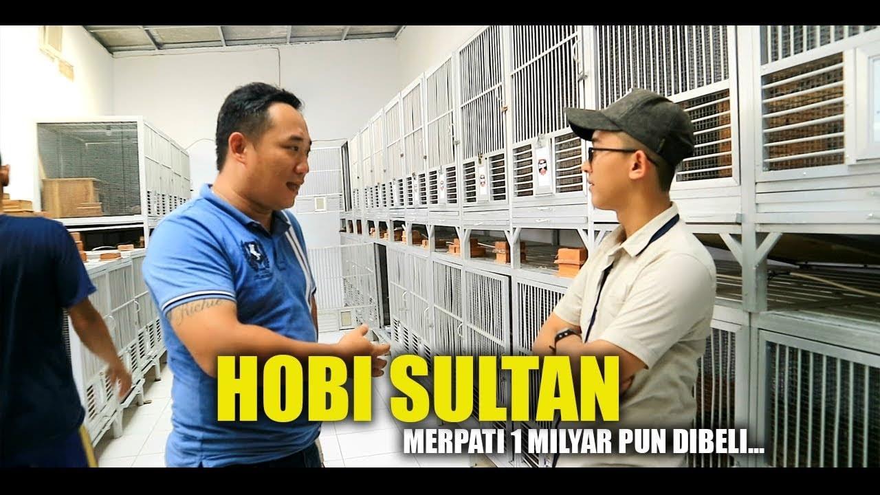 HOBI SULTAN Merpati 1 MILYAR Pun Dibeli!!!