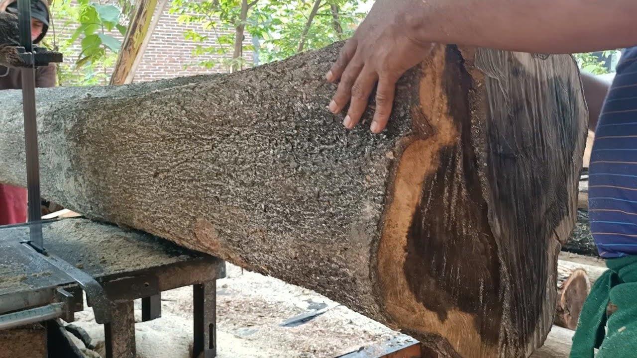 kerasnya kayu akasia super besar menantang tajamnya gergaji bandsaw rajang bahan kusen
