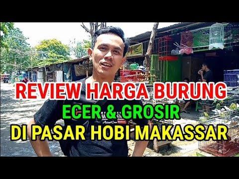REVIEW HARGA BURUNG ECER & GROSIR DI PASAR HOBI MAKASSAR