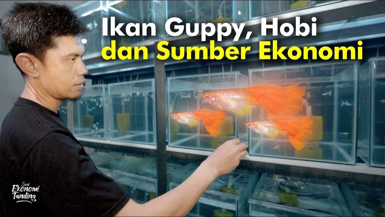 Ikan Guppy, Hobi dan Sumber Ekonomi
