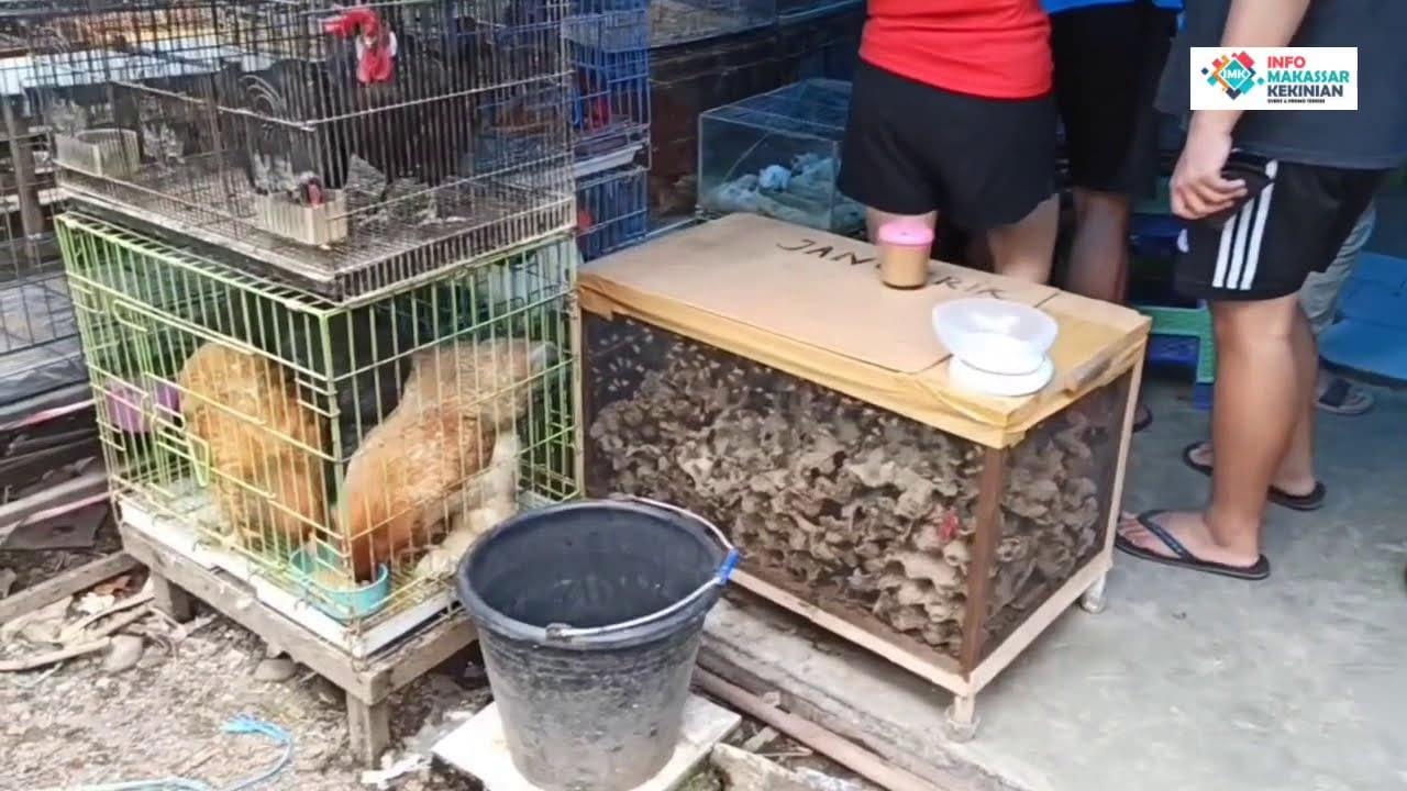 Ada Apa di Pasar Hobi Toddopuli Makassar ?